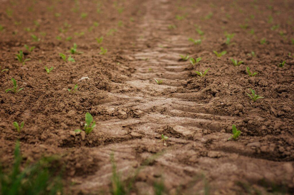 Wiosenna uprawa ziemi z Ursusem